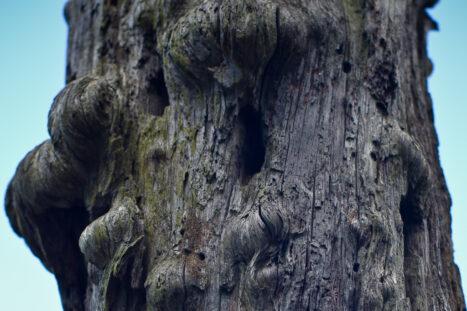 En bild på trollträdet.